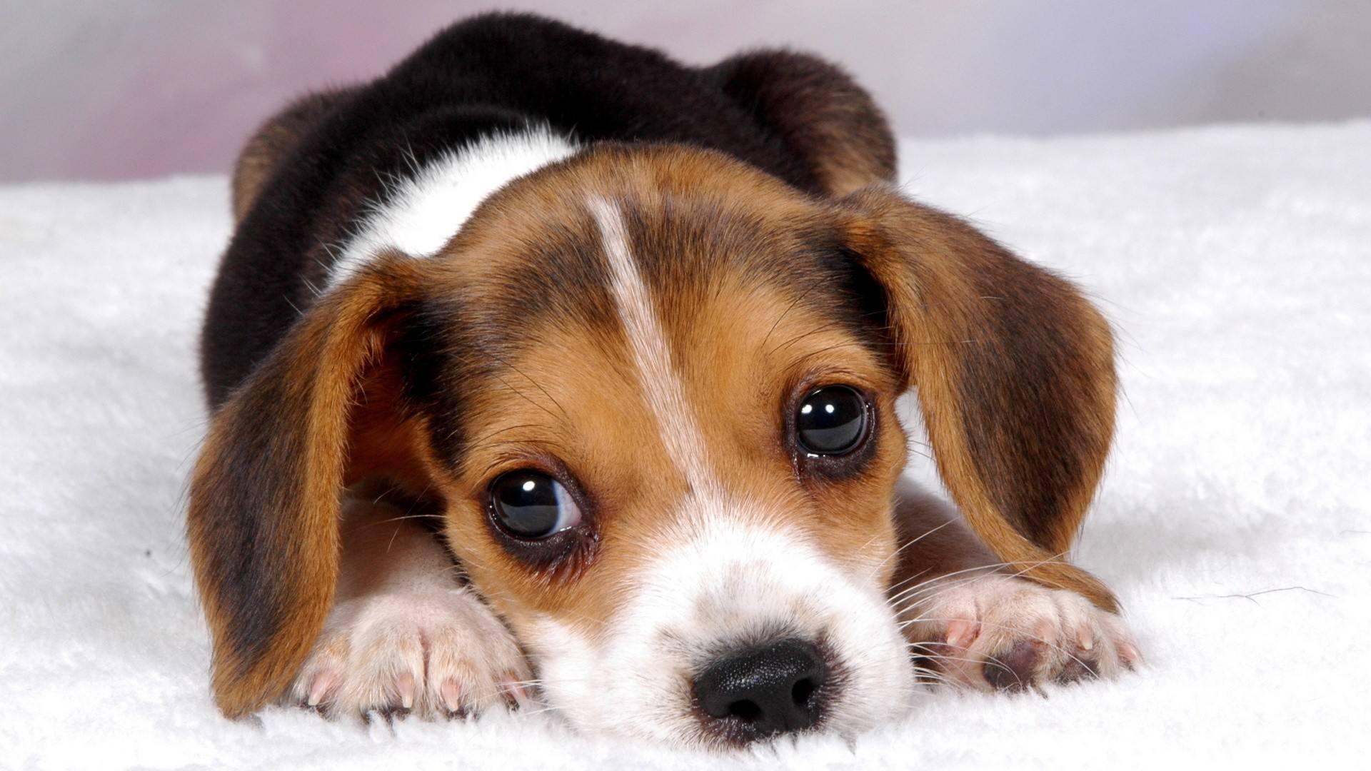 狗狗肾炎怎么办?狗狗肾炎如何治疗?